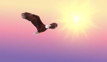 Bird Soaring